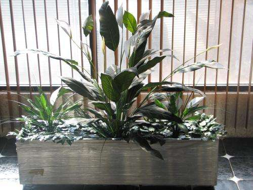Preview - Plantas artificiales decorativas ...