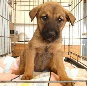 Tina. cachorrita de 5 meses. juguetona, sociable, cariñosa