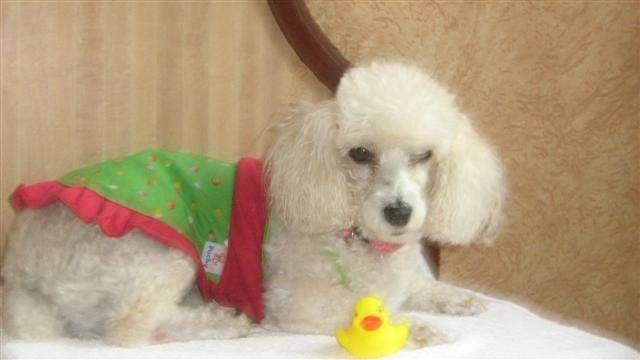 Aceptamos mascotas casas y departamentos amueblados en renta en merida