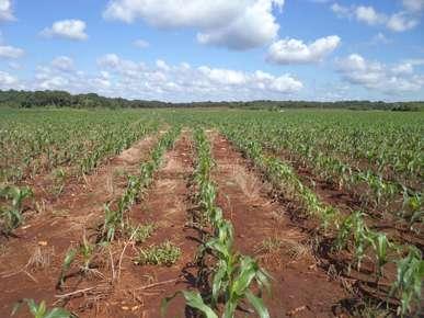 Terrenos ejidales en venta para inversión. yucatan.
