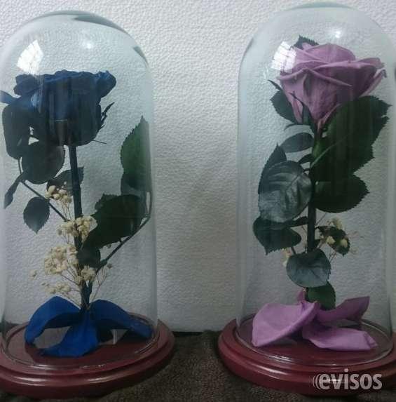 Rosas preservadas en urnas de cristal