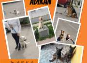 Adiestramiento Canino cursos a domicilio