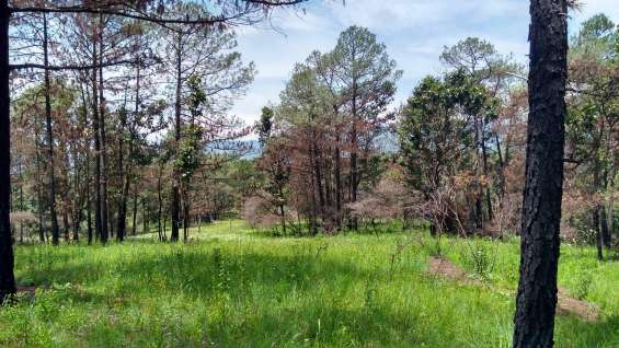Terreno de 16.6 hectáreas con bosque y río cerca de donato guerra