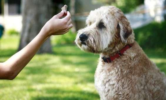 Entrenamiento gratis para perros y cachorros