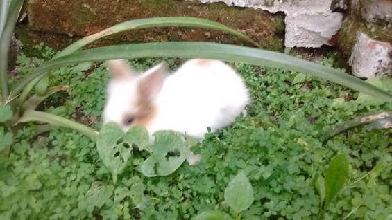 Conejos - conejitos para mascota