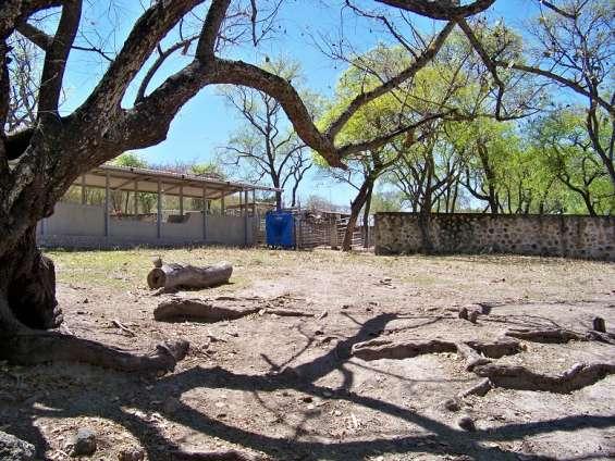 Rancho ganadero de 687 has con abundante agua tesistan