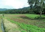 Terreno con abundante agua y río ideal para Mini Rancho y Huerta frutal