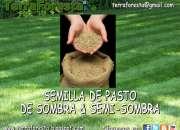 PASTO DE SEMI-SOMBRA y SOMBRA EN SEMILLA