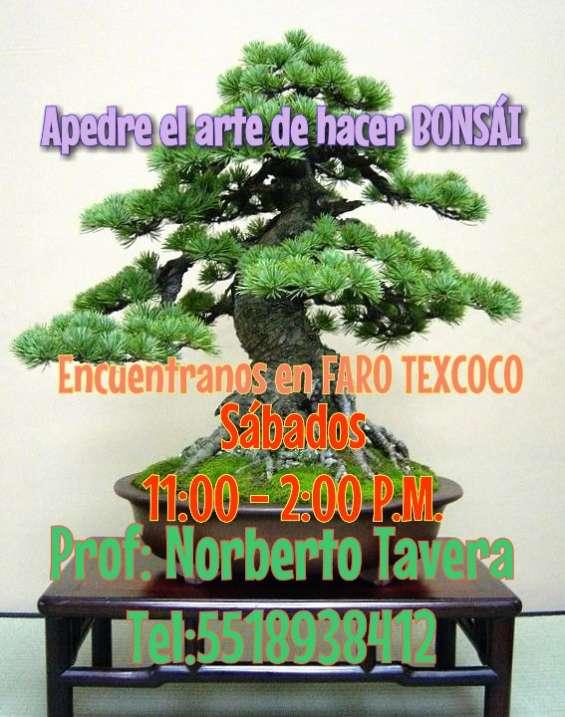 Taller y/o claces de árboles bonsái