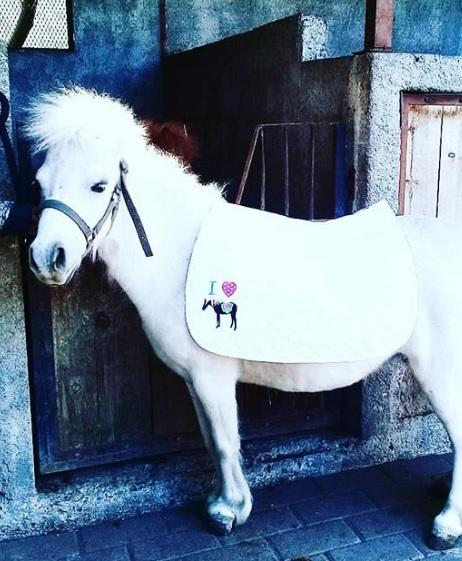 Renta de pony